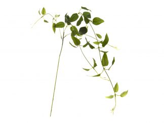 7C48D00001 Clementis Leaves Green 90Cm (12)