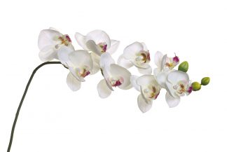 8J-1219S0003 White Orchide 85 cm