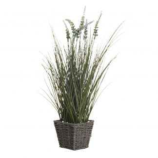 8J-11Ak0023 Pointed Reed In The Basket. 55 Cm...