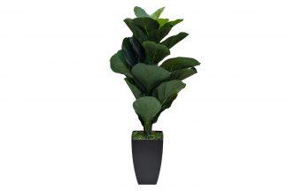 29Bj-910-29 Ficus in a pot 90 cm
